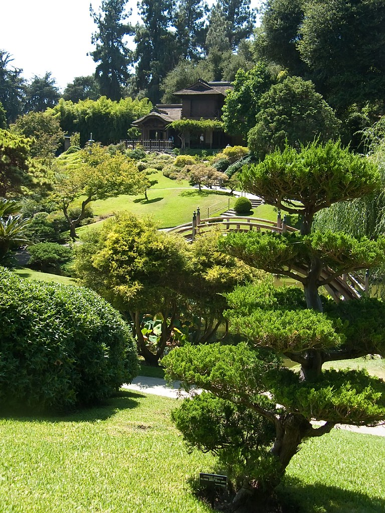 Artisticly Pruned Trees In Japanese Garden At Huntington G