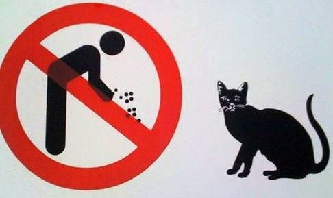 Image result for don't feed the cats