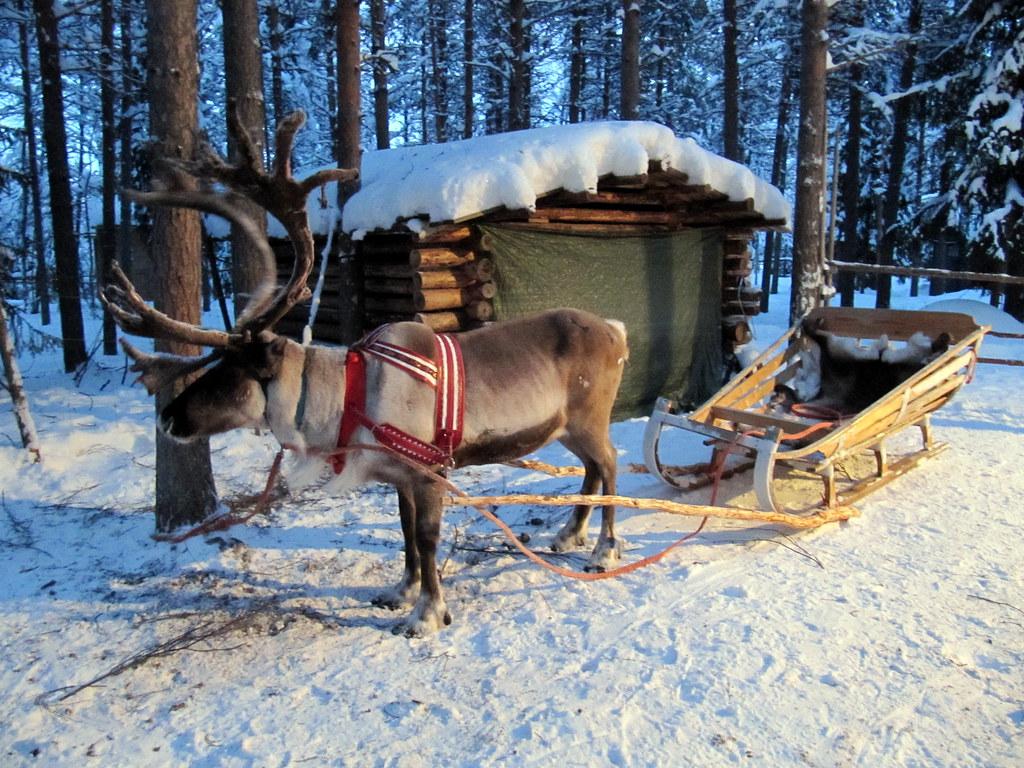 Reindeer sleigh ride Kuusamo Lapland