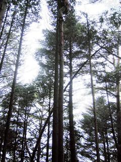 木登り・伐採