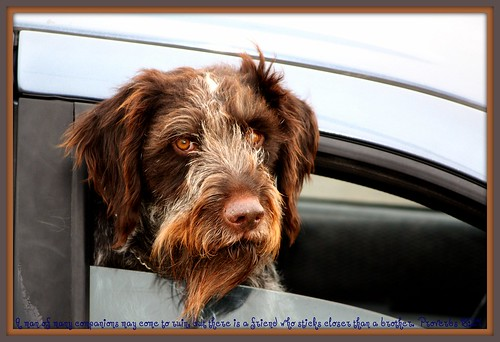 Image Result For Faithful Friends Dog