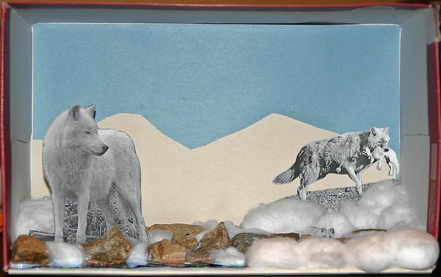 Arctic wolf diorama - photo#24