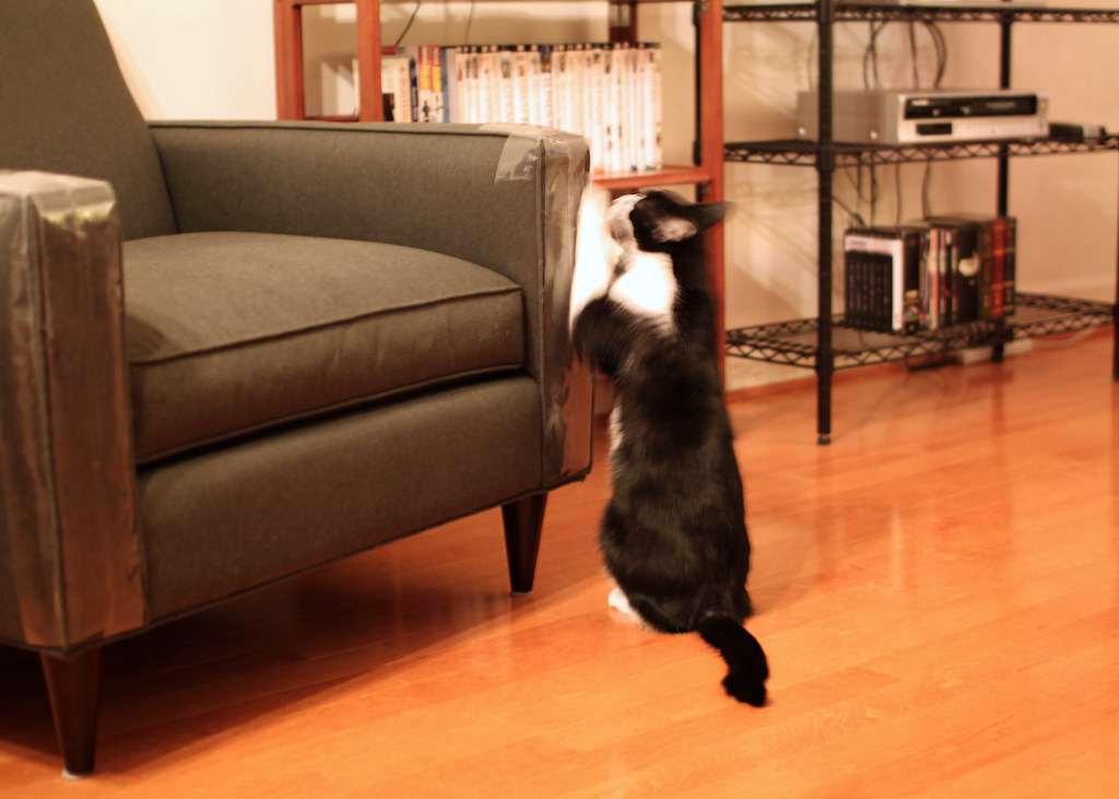 Oliver destroying the furniture oliver scratching the for Furniture hell s kitchen