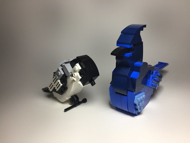 Black Capped Chickadee and Stellar's Jay