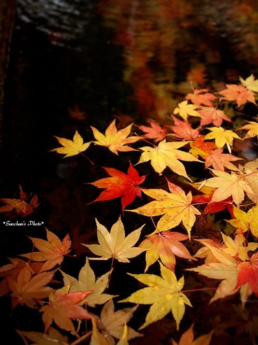 Beauty of Autumn | by Saori_