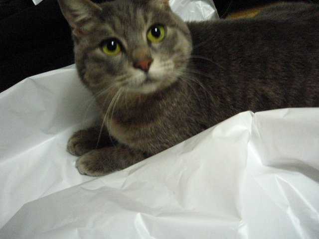 This bag is mine
