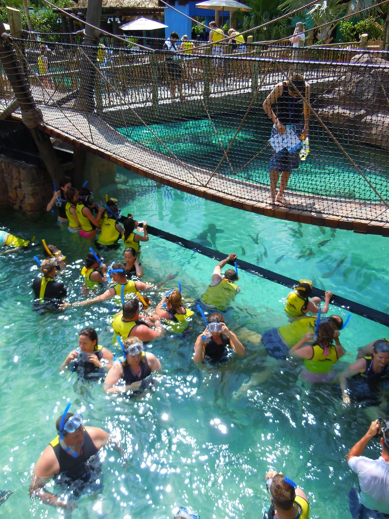 Grand Reef at Discovery Cove, SeaWorld Orlando | Inside ...