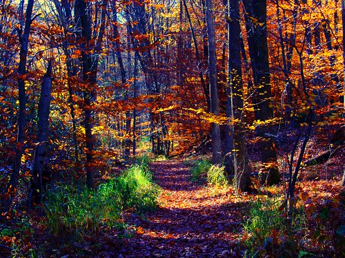 Forrest Path | by pjovertherainbow