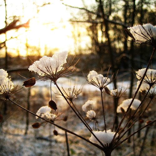 snow | by karin brigitta