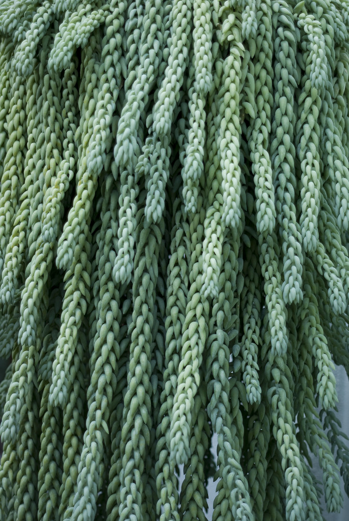 all for free credit burros tail