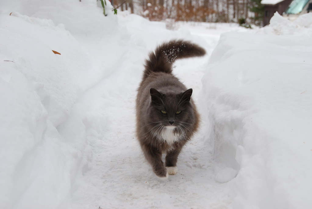 how to get rid of feral cat colony