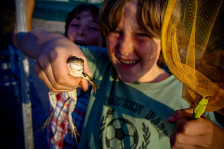 Frog catching | by Mark Surman