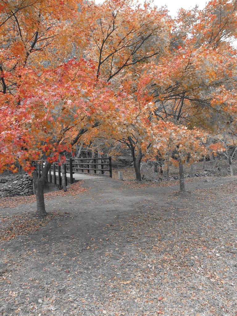 Fall Trees Naejangsan National Park South Korea Fall