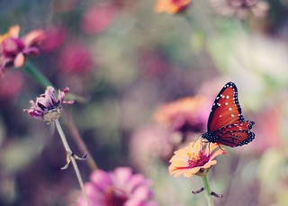 Faded flowers and one last butterfly | by simply colleen