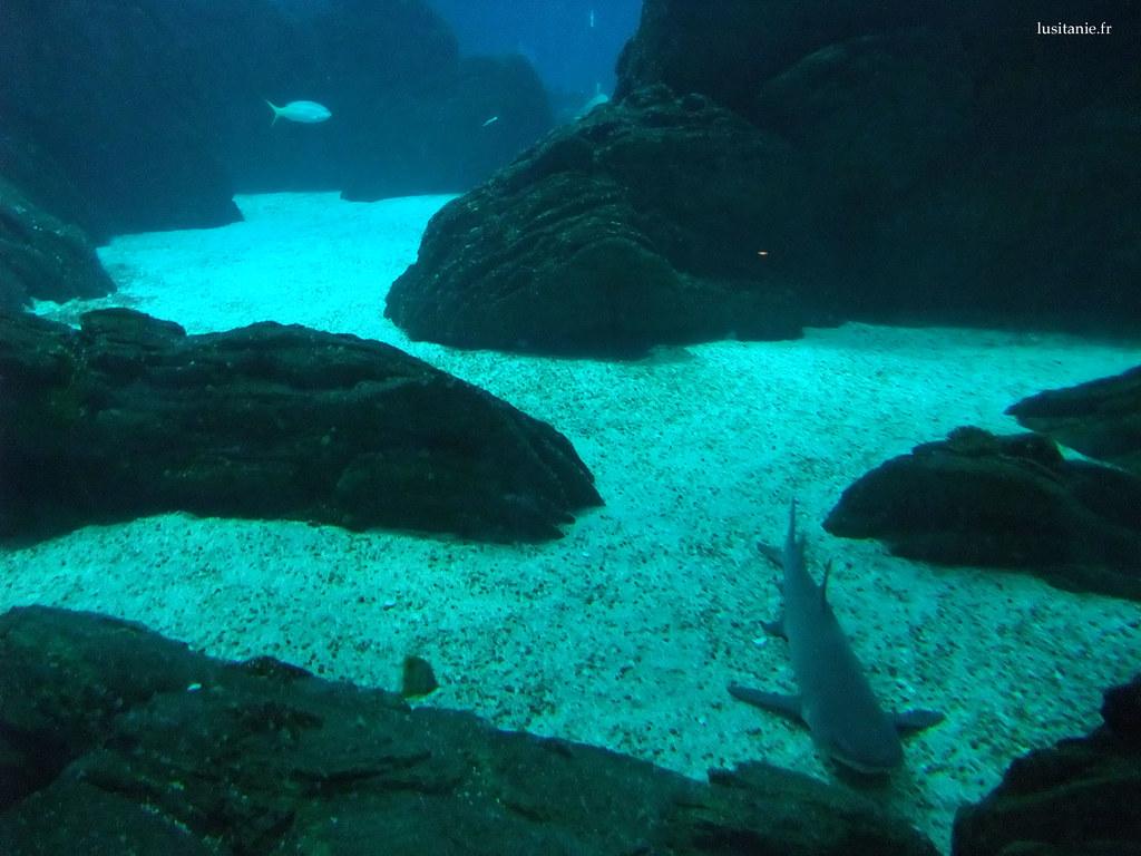 Le Oceanario possède de très nombreuses variétés de poissons, y compris des requins