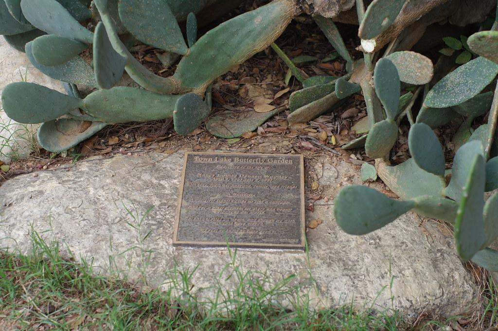 ... Treasuresthouhast Town Lake Butterfly Garden In Austin   By  Treasuresthouhast