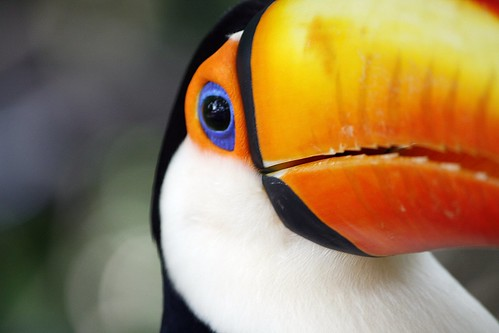 Toucan bird | by @Doug88888