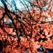 Mt Tabor Leaves
