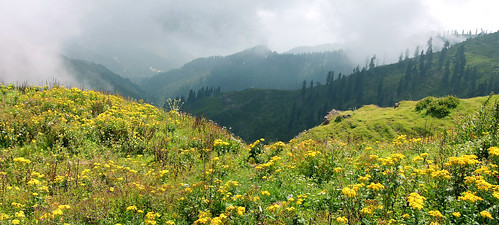 Flowery Meadows of Haji Pir | by NotMicroButSoft (Fallen in Love with Ghizar, GB)