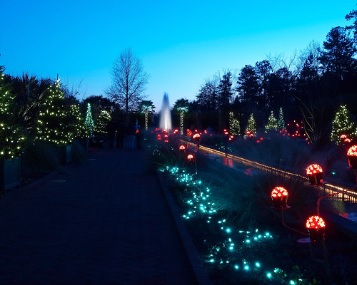 Daniel stowe gardens holiday lights at daniel stowe - Daniel stowe botanical garden christmas ...