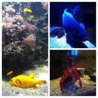SEALIFEn Värikkäitä kaloja