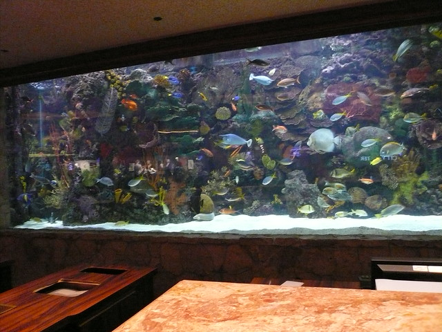 Lobby fish tank 1 of 3 mirage hotel las vegas july 2009 for Fish tank camera