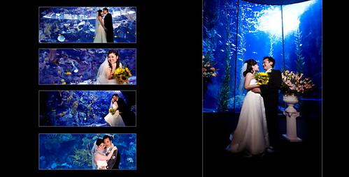 aquarium of the pacific wedding photo by jay studiocom