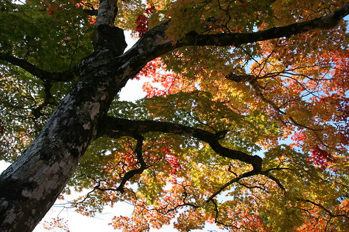 Autumn in Kyoto [7 November 2009] | by EYLC