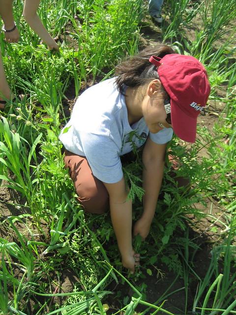Photo - Weeding garden make work easier ...