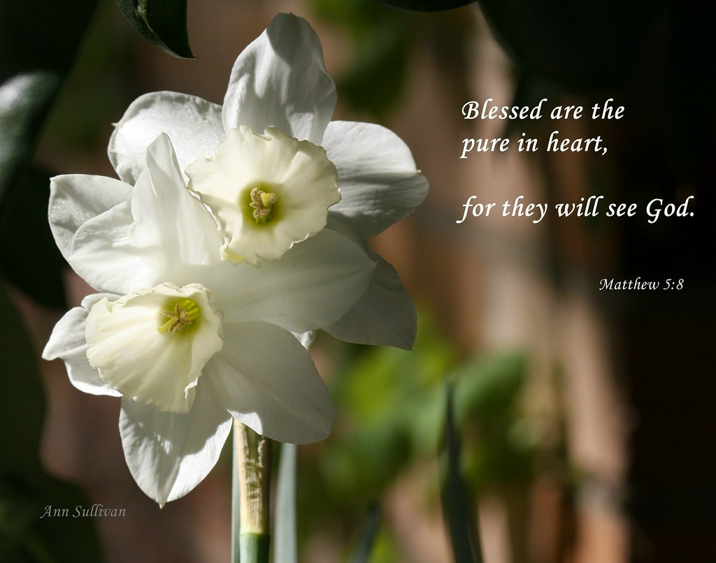 Blessed are the pure in heart, for they will see God. ~ Ma… | Flickr