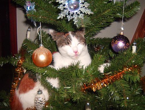 katze auf weihnachtsbaum habt ihr sowas schon mal. Black Bedroom Furniture Sets. Home Design Ideas