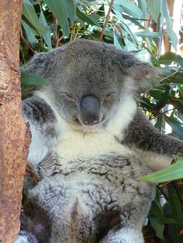 Lone Pine Koala Sanctuary Cafe Menu