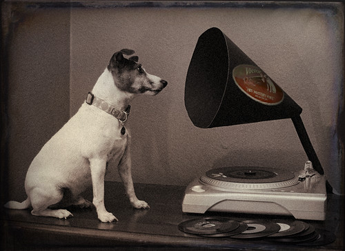 his master 39 s voice basil can 39 t really go into a record sto flickr. Black Bedroom Furniture Sets. Home Design Ideas