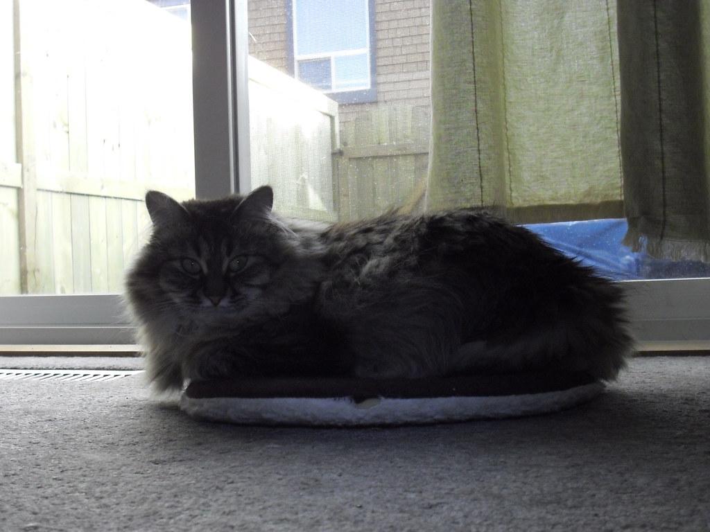 Best Window Cat Flap Wirral