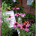 """Please enlarge to see what the slugs are doing with my garden sign """"EEK"""""""