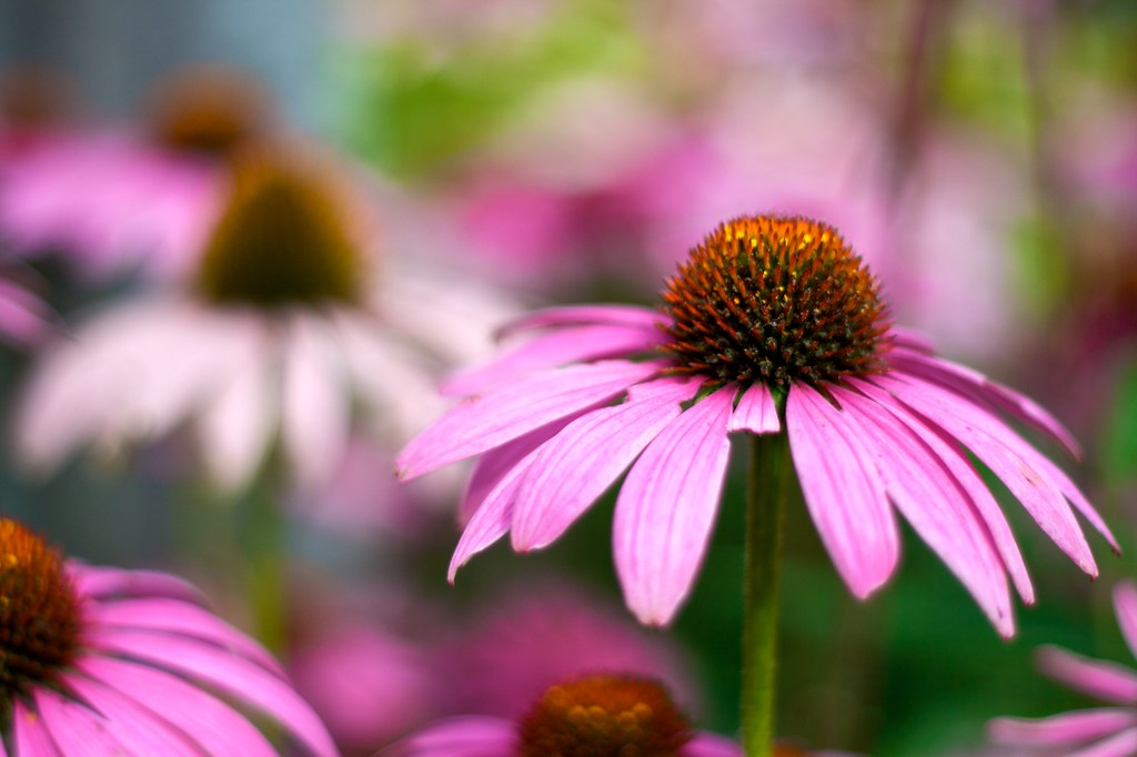 Late Summer Flowers Rob Friesel Flickr
