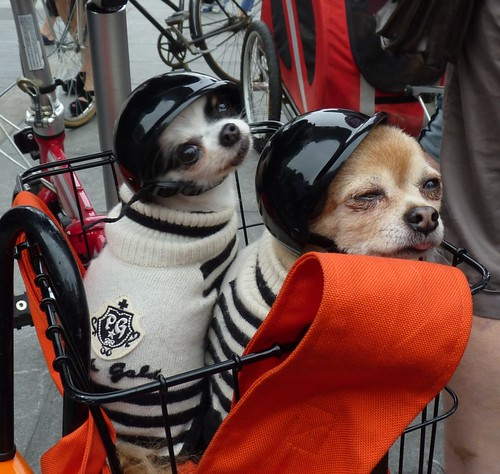 Doggie Pedal Parade | by GammaBlog