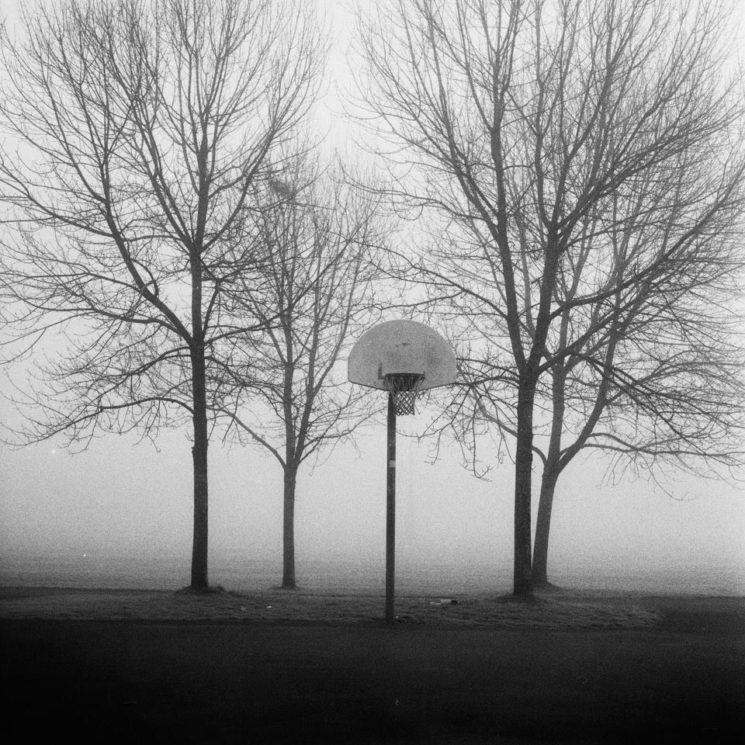 hoops_and_trees-745x745