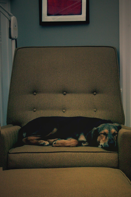 The most expensive dog bed ever adam patch flickr for Extravagant dog beds