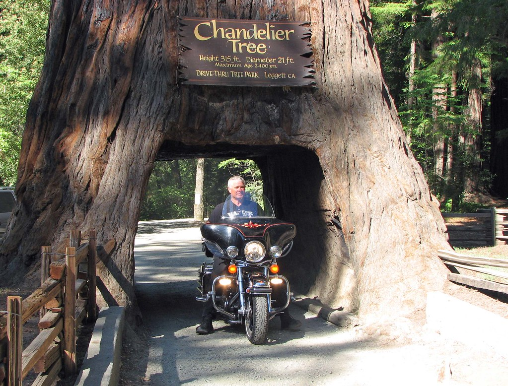 Chandelier tree motorcycle a motorcycle driving trough t flickr chandelier tree motorcycle by dcsaint arubaitofo Choice Image