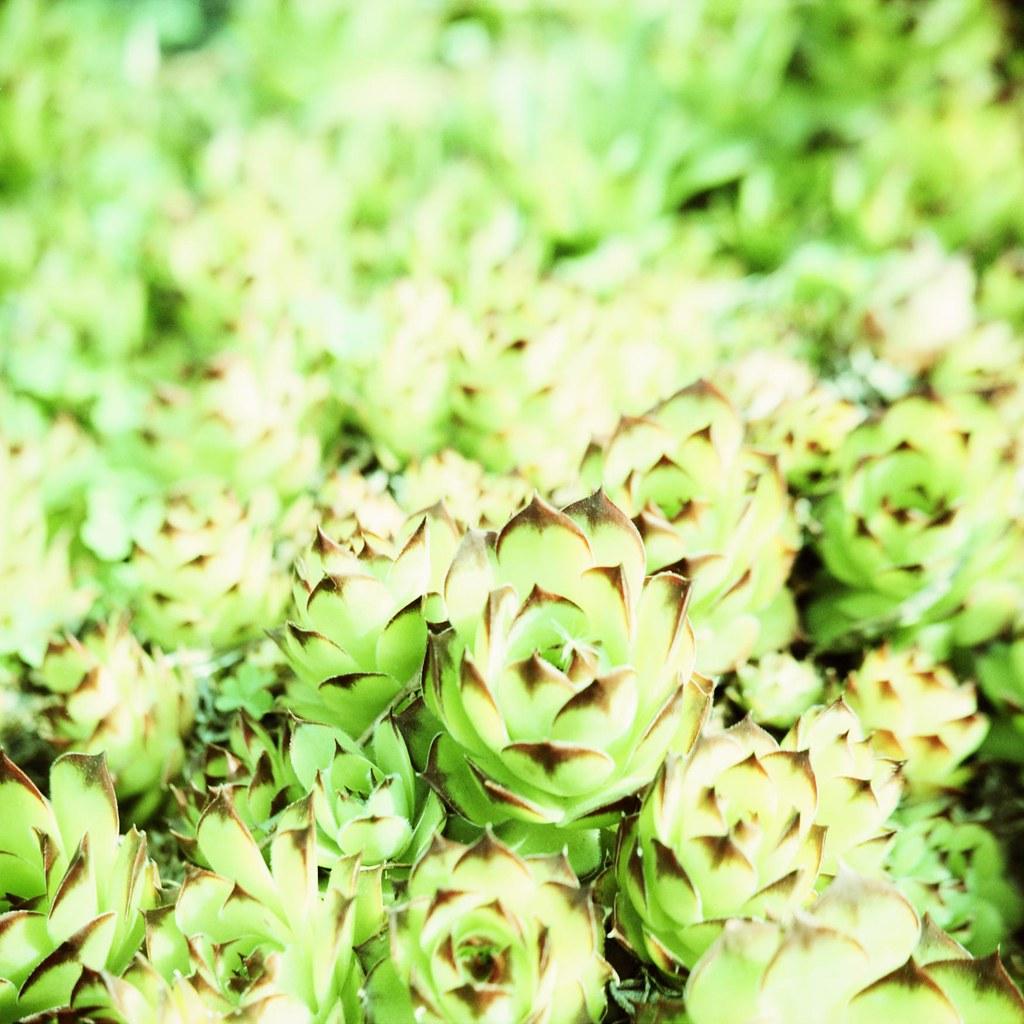 tara lilly photography blog DxQ