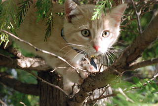 Tree Kitty | by swellvegan