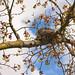 Old Robin Nest