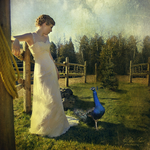 Bride with Peacock | by fesign