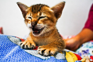This is my cat, and he's laughing! LOL | by Sham Hardy