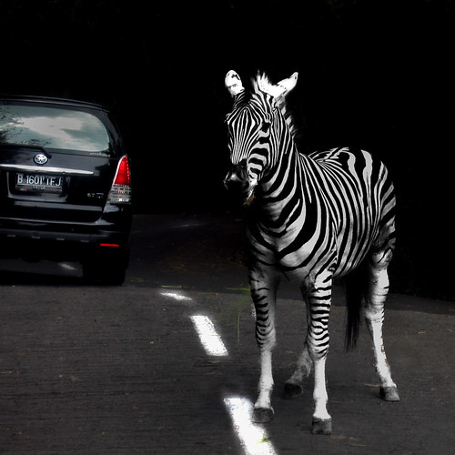 zebra cross | by *Cak Noor*