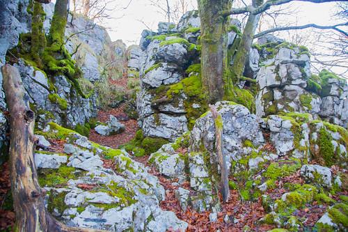 Parque Natural de Gorbeia  #DePaseoConLarri #Flickr -5353
