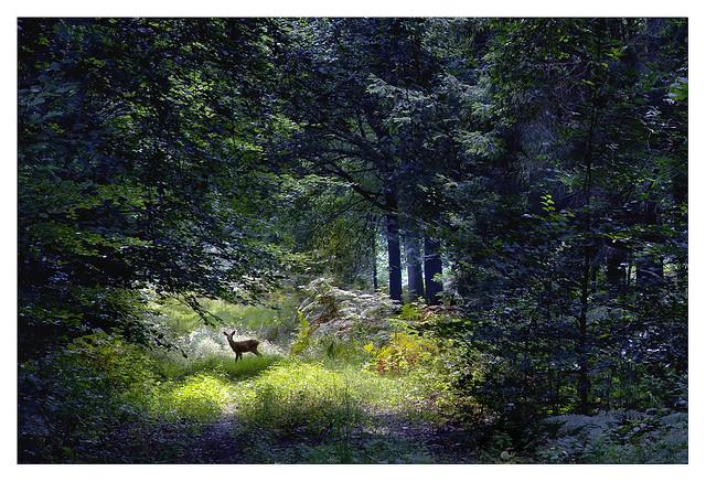 bambi   by henkbraam