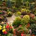 Morning after rain - Summer garden flowers