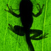 Emerging Frog